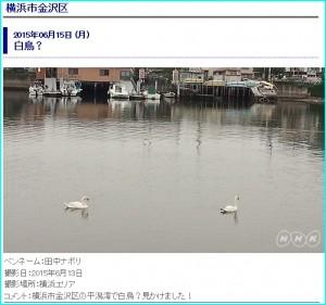 白鳥-f702